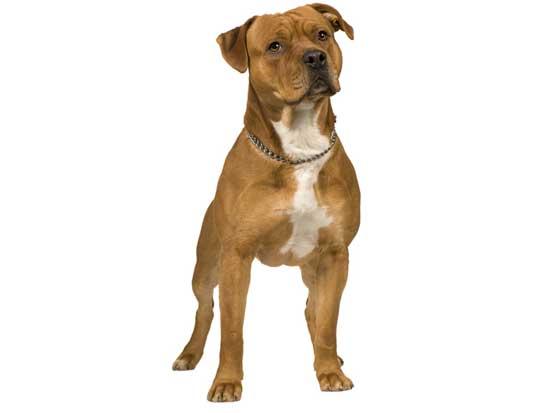 Dog Breeds 5