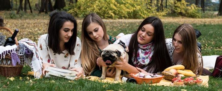 Gathering to socialize a dog