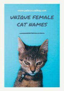 Unique Female Cat Names (1)