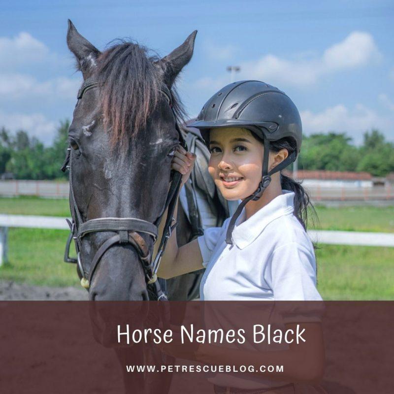 Horse Names Black