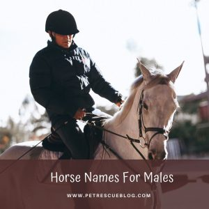 Horse Names For Males