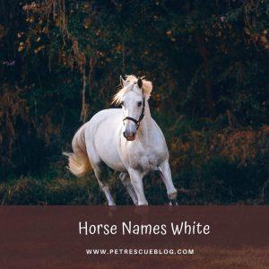 Horse Names White