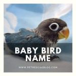 Baby Bird Name