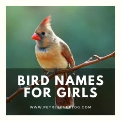 Bird Names for Girls