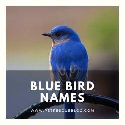 Blue Bird Names