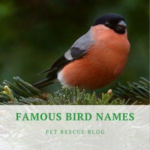 List of Famous Bird Names