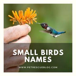 Names of Small Birds