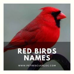 Red Birds Names