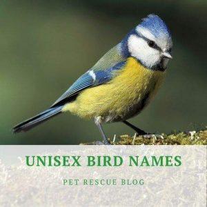 Unisex Bird Names