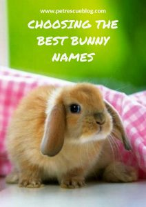 choose the best bunny names