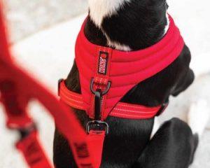 Kong Dog Harness